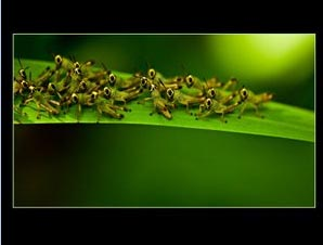 Grasshoppers by Francis Magalona